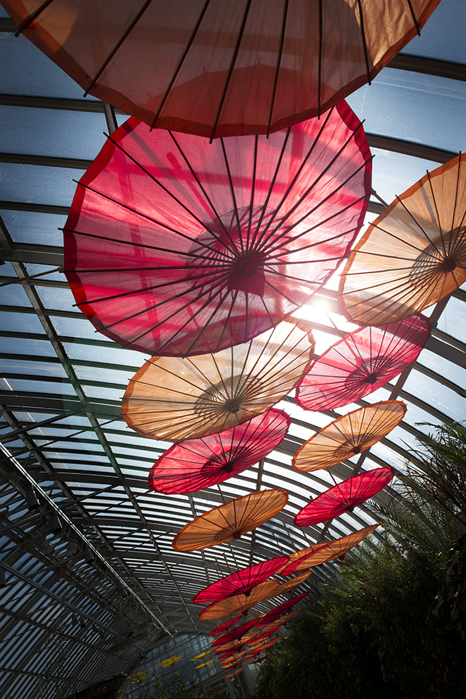 Japanese umbrellas at Phipps Conservatory