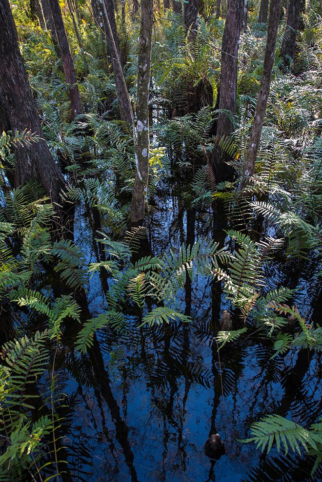 #cypress, #fern, #water, #blue, #green, #sunlight, #NikonD800