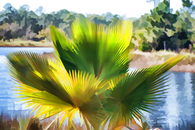 #palm, #queenpalm, #naples, #florida, #watercolor, #tropical, #topazlabs