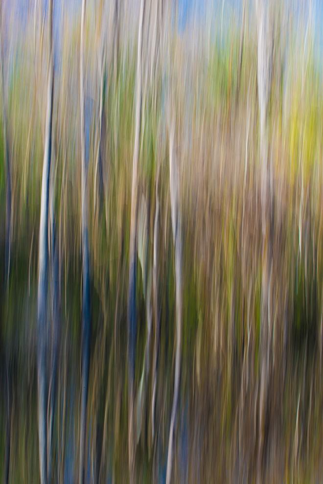 #ICM, #Florida, #trees, #blu, #green, #reflection