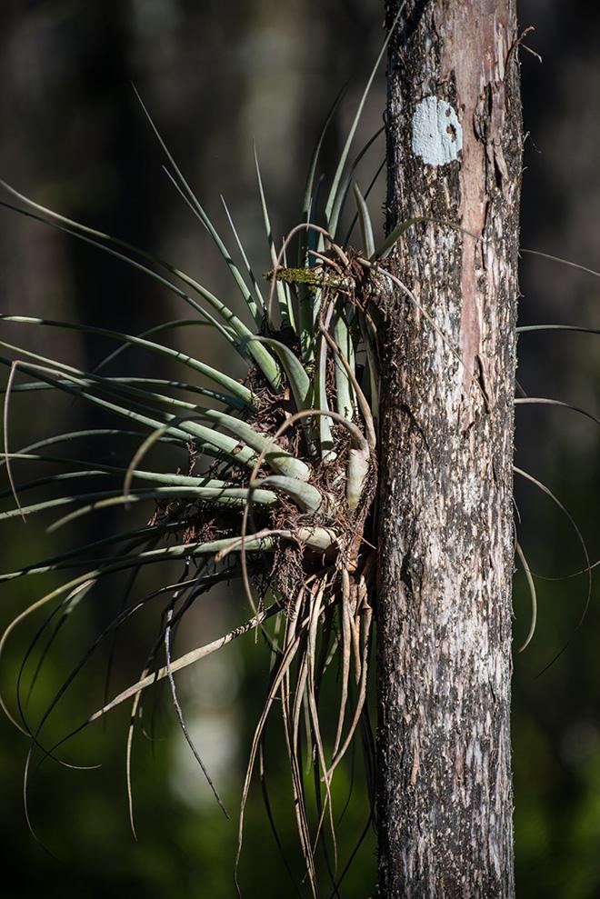 #cypress, #swamp, #tree
