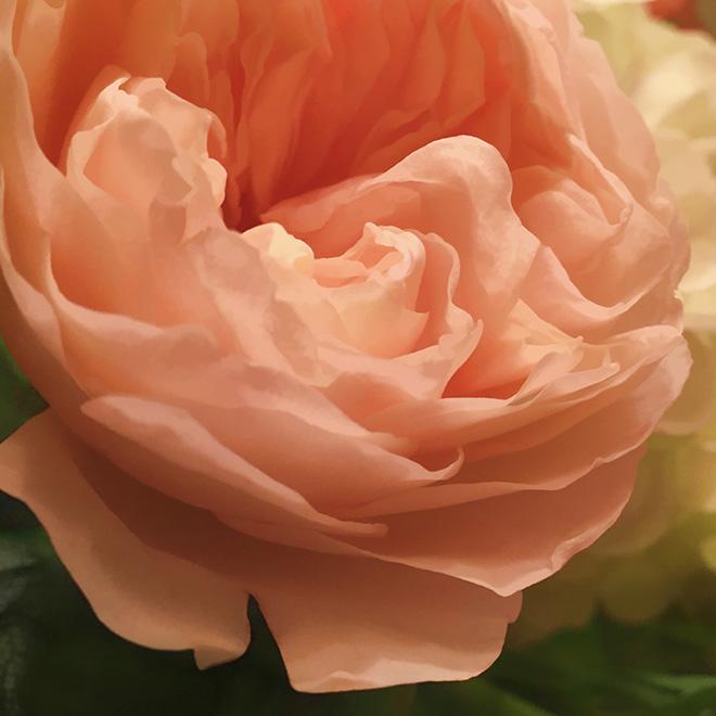 #rose, #easter, #flower, #topaz