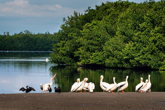 #pelican, #cormorant, #Sanibel, #florida, #birds, #wildlife, #birds, #dingdarling, #preserve