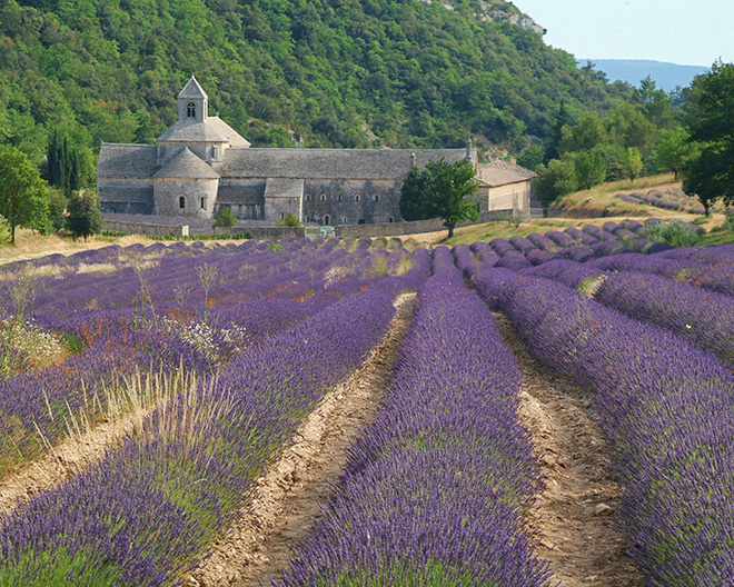Lavender_abbey