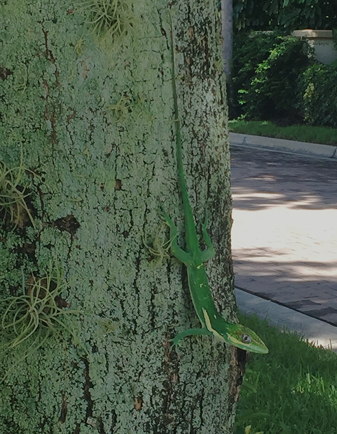 Lizard_5149LR