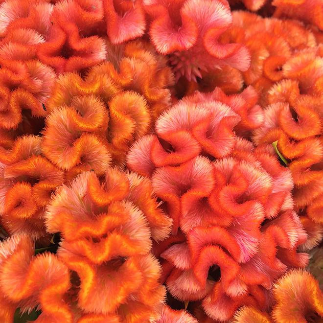 #flowers, #pink, #orange, #shapes, #textures