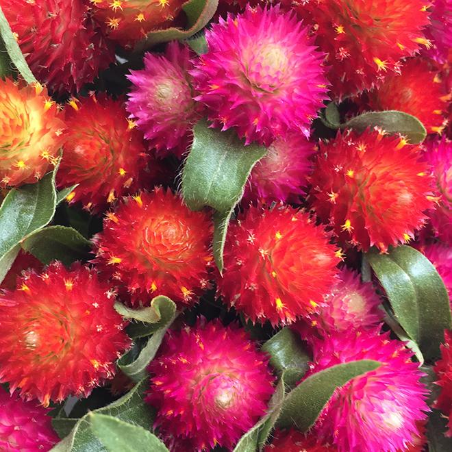 #flowers, #farmersmarket, #orange, #pink, #yellow