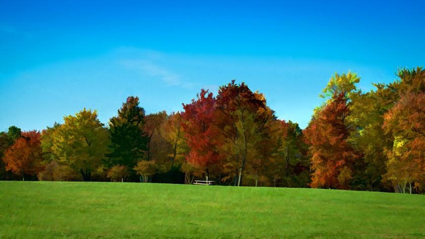 #topaz, #foliage, #sewickley, #fall, #autumn, #pennsylvania