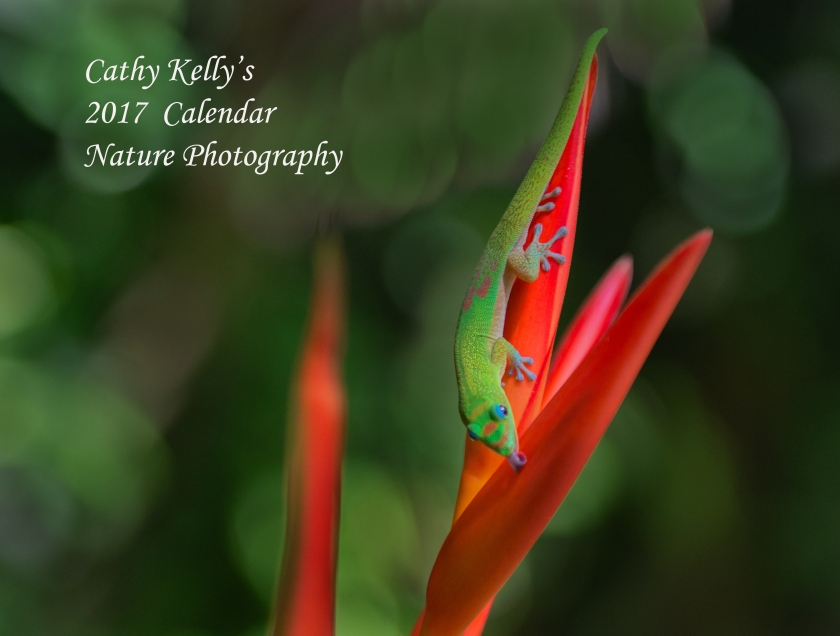 #calendar, #naturephotography, #landscape, #birds, #flowers