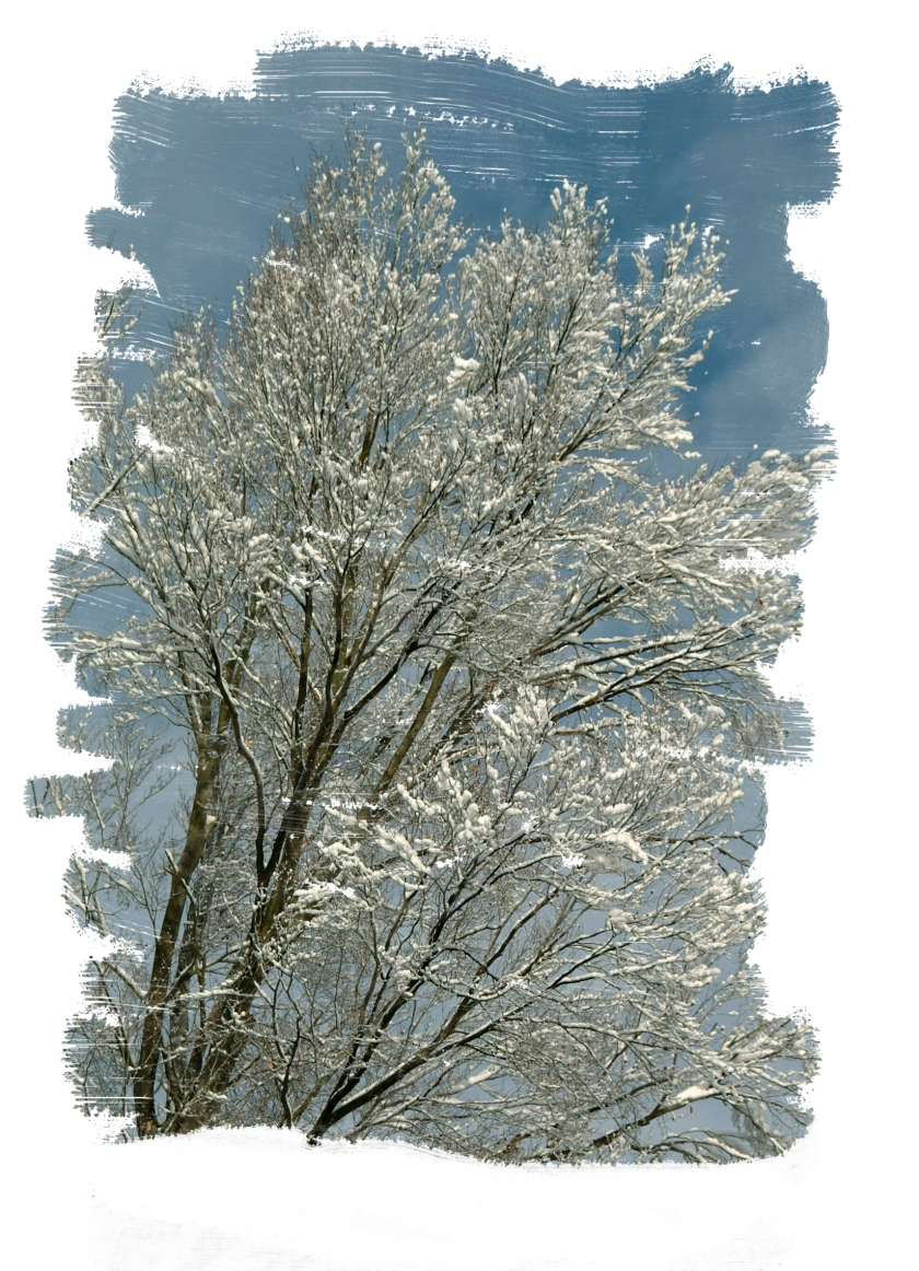 #winter, #snow, #december, #tree, #howto, #pennsylvania, #sewickley, #photoshop, #cold