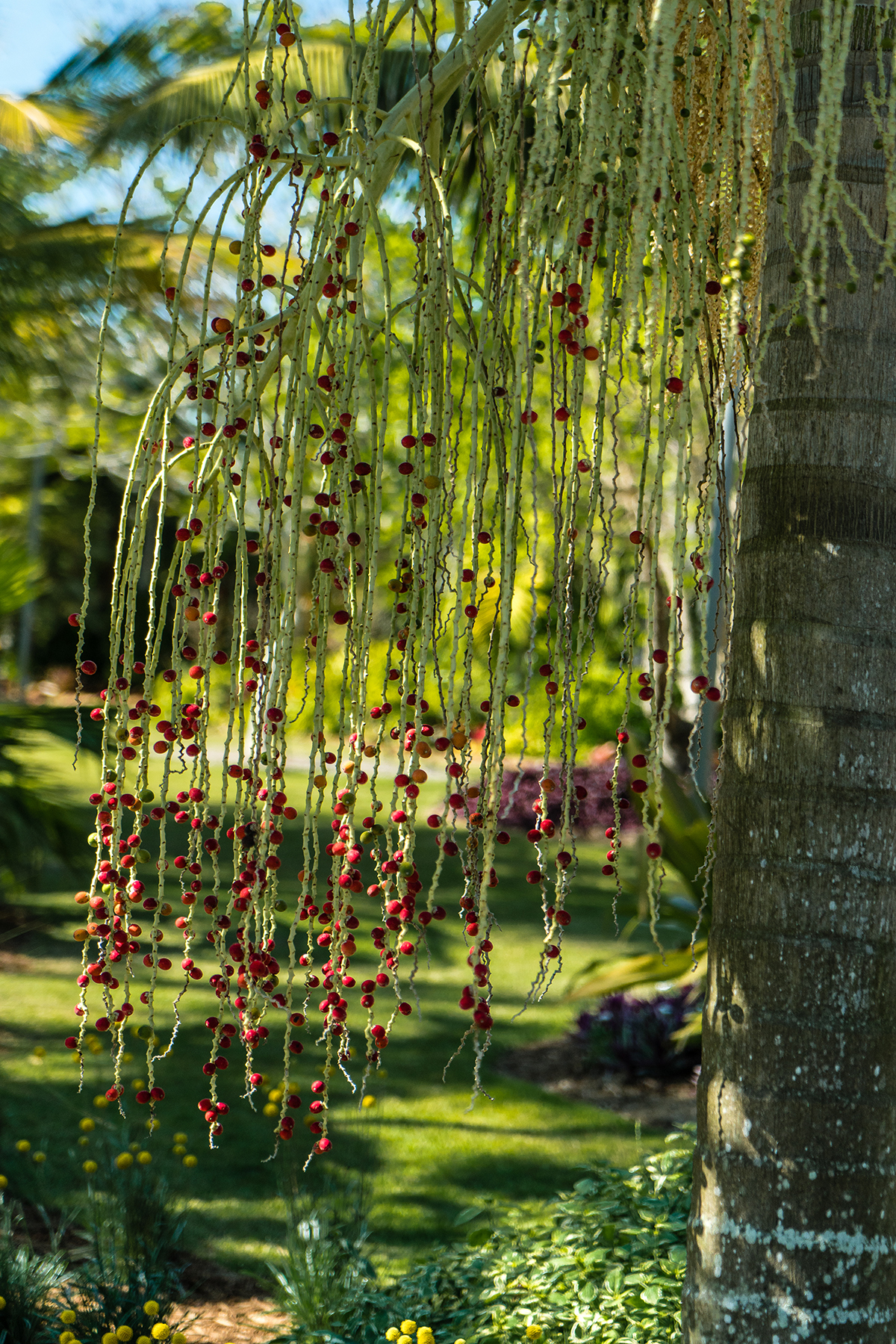 #palm, #pollination, #spring, #florida, #nature, #trees, #botanical, #garden, #red