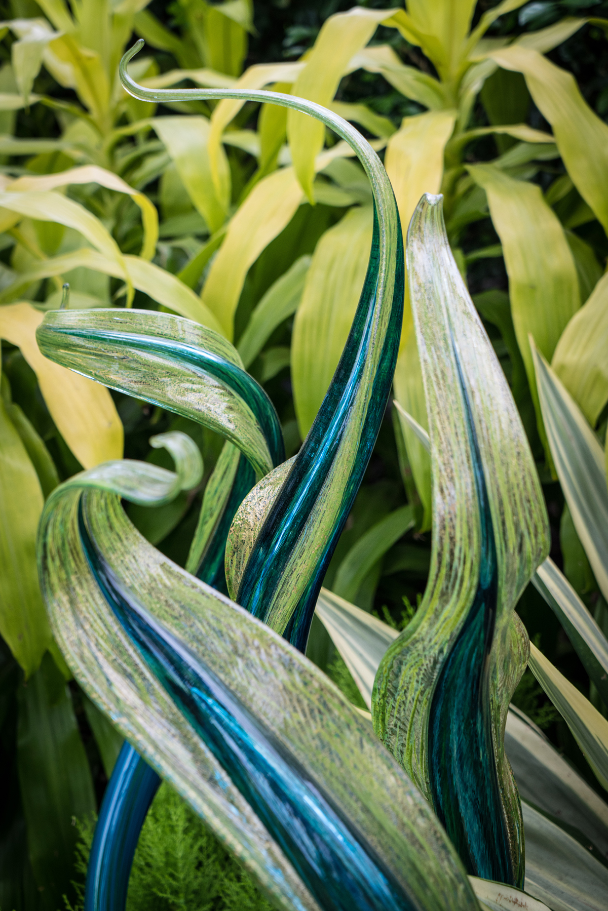 #chihuly, #leaves, #NYBG, #newyork, #botanical, #botanicalgarden, #plants, #glass, #art, #artimitatesnature, #green, #greenandblue