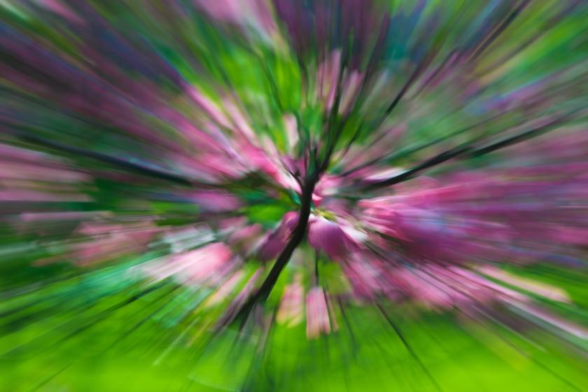 #pinkandgreen, #dogwood, #ICM, #Nikon, #spring, #zoom