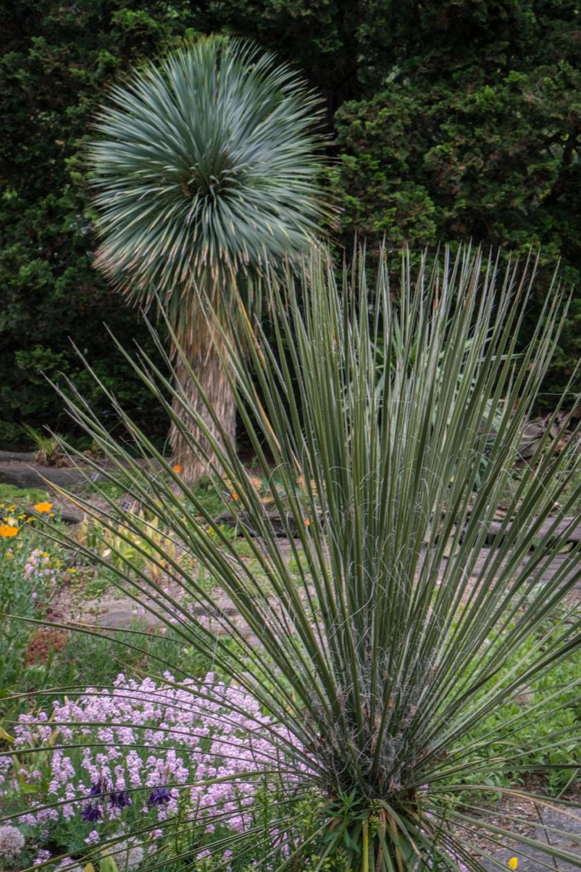 #palm, #tropical, #rockgarden, #inspiration, #NYBG, #newyork, #botanical, #botanicalgarden, #sony