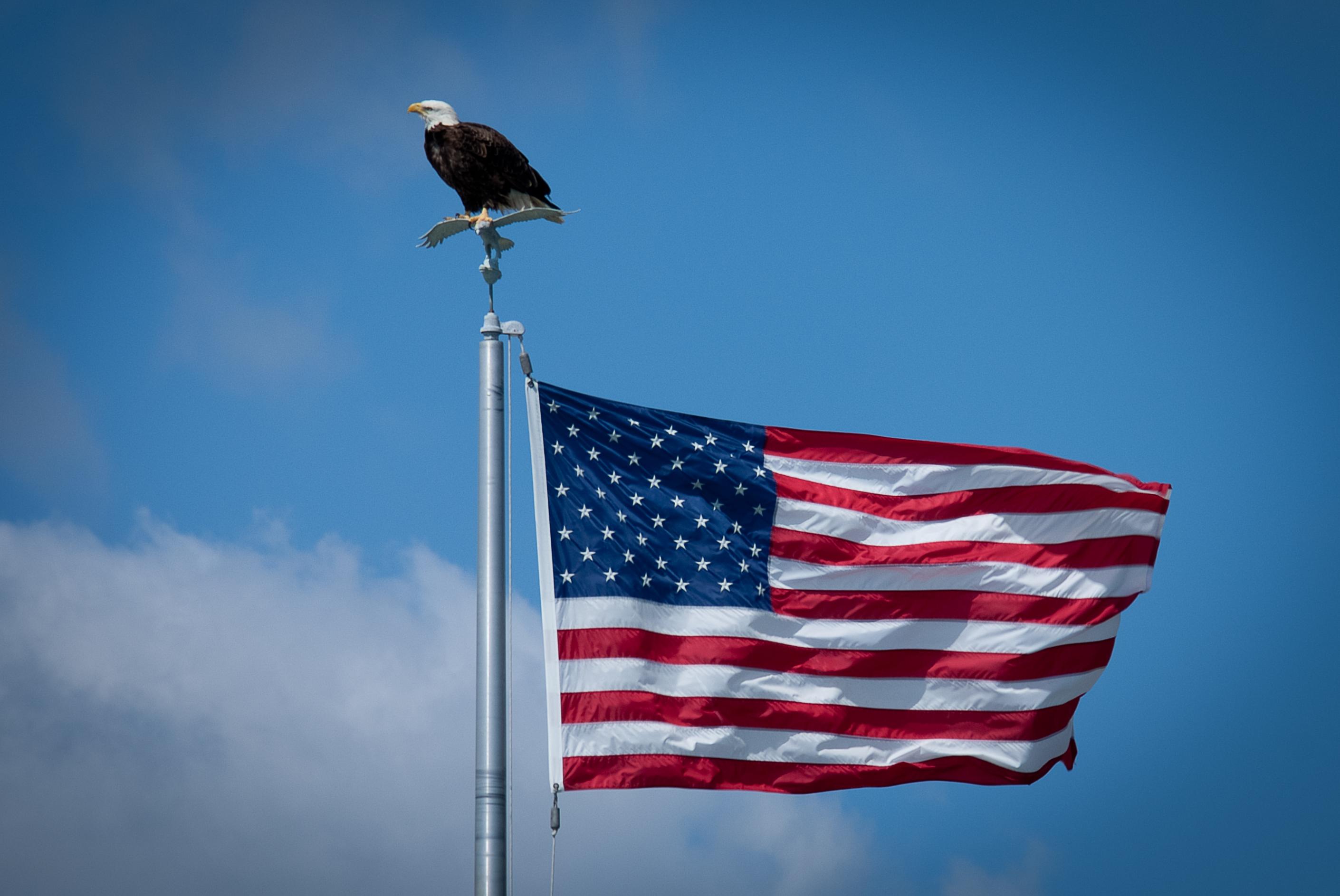 #flagday, #baldeagle, #florida, #naples, #americanflag, #bluesky