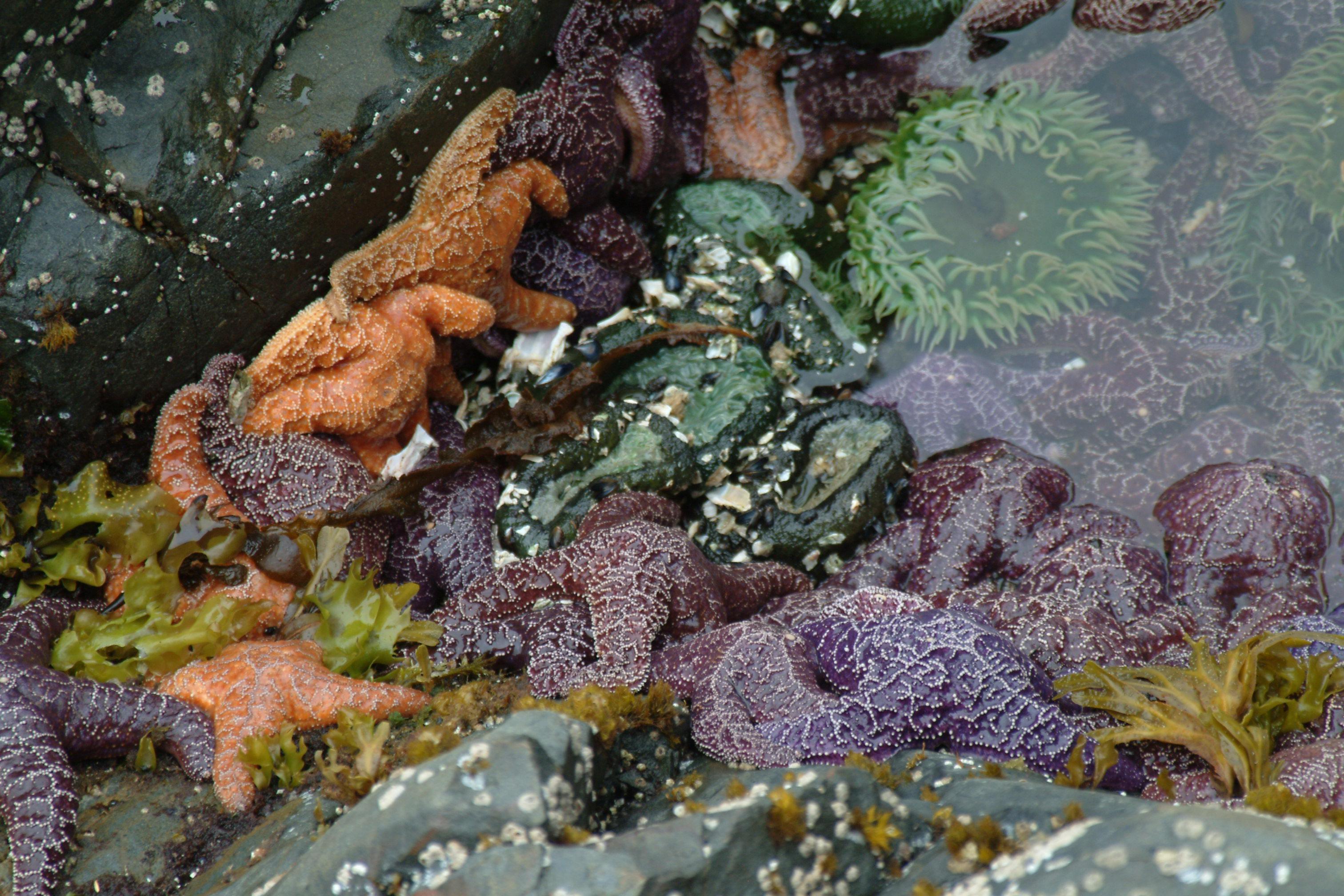 #starafish, #alaska, #nature, #wildlife