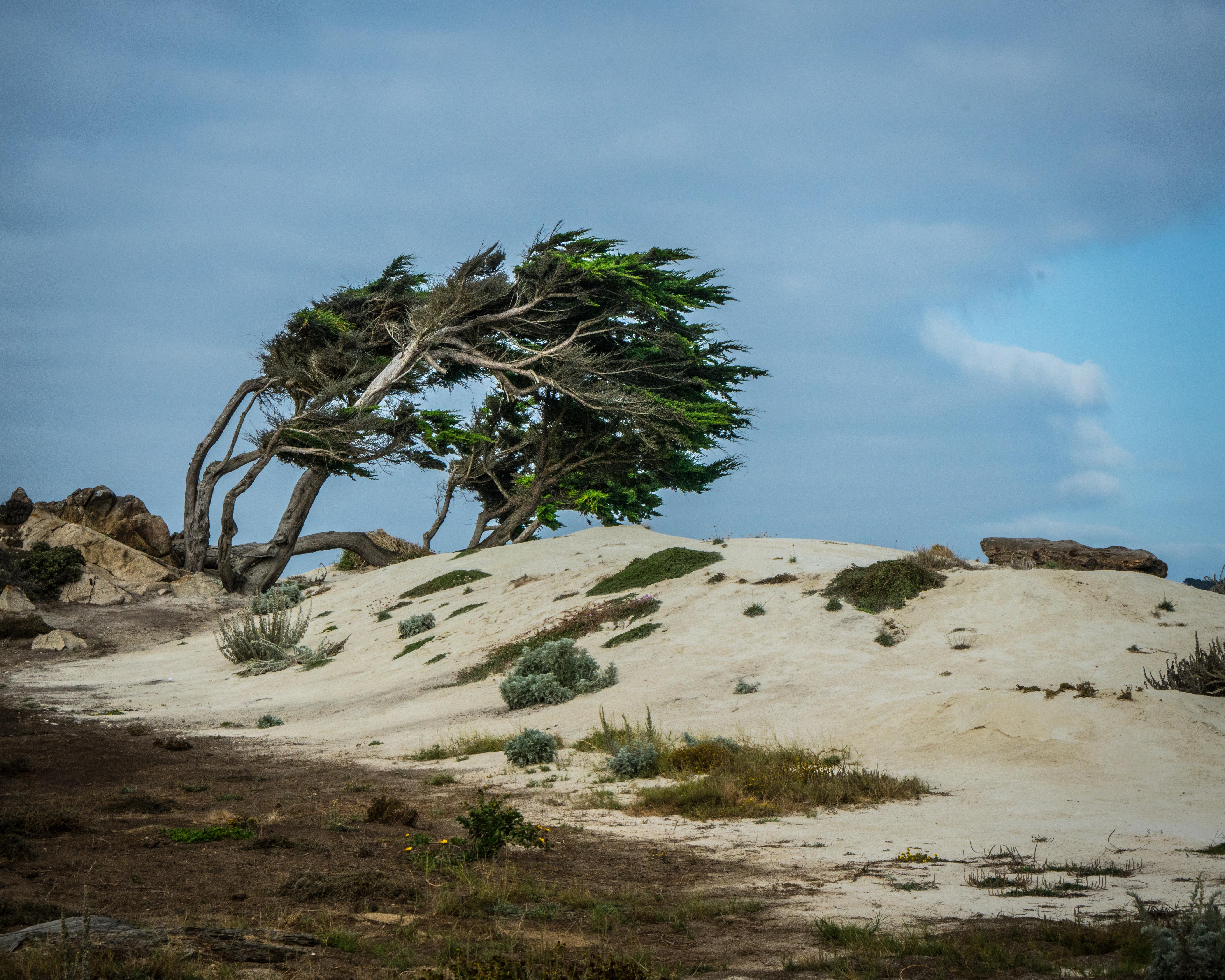 #cypress, #dune, #wind, #clouds, #coast, #maonterey, #golf, #nature, #landscape
