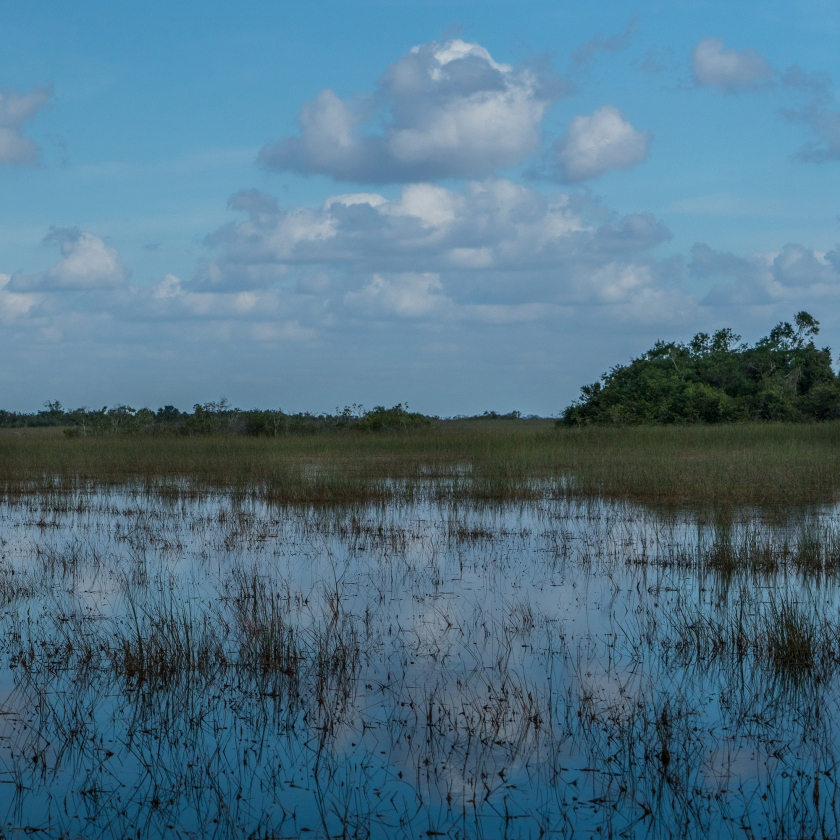 #everglades, #sharkvalley, #clouds, #florida, #sunnyday, #nationalpark, #bluesky