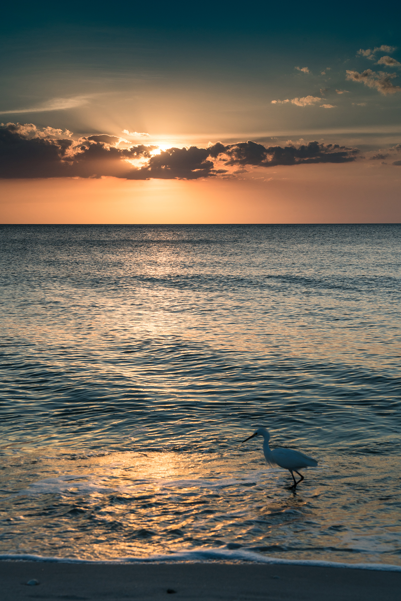#sunset, #egret, #clouds, #waterscape, #reflection, #gulf, #florida, #naples