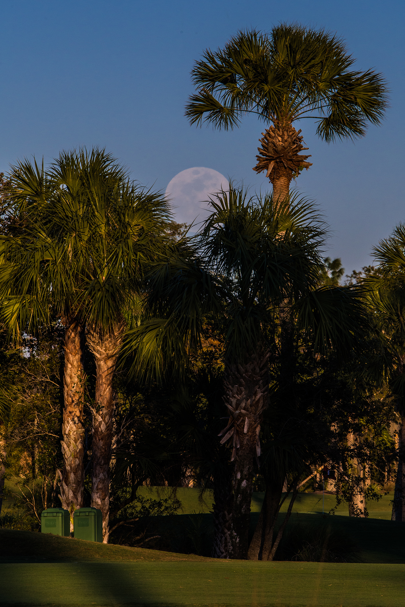 #supermoon, #bluemoon, #risingmoon, #palms, #firstsight, #sky