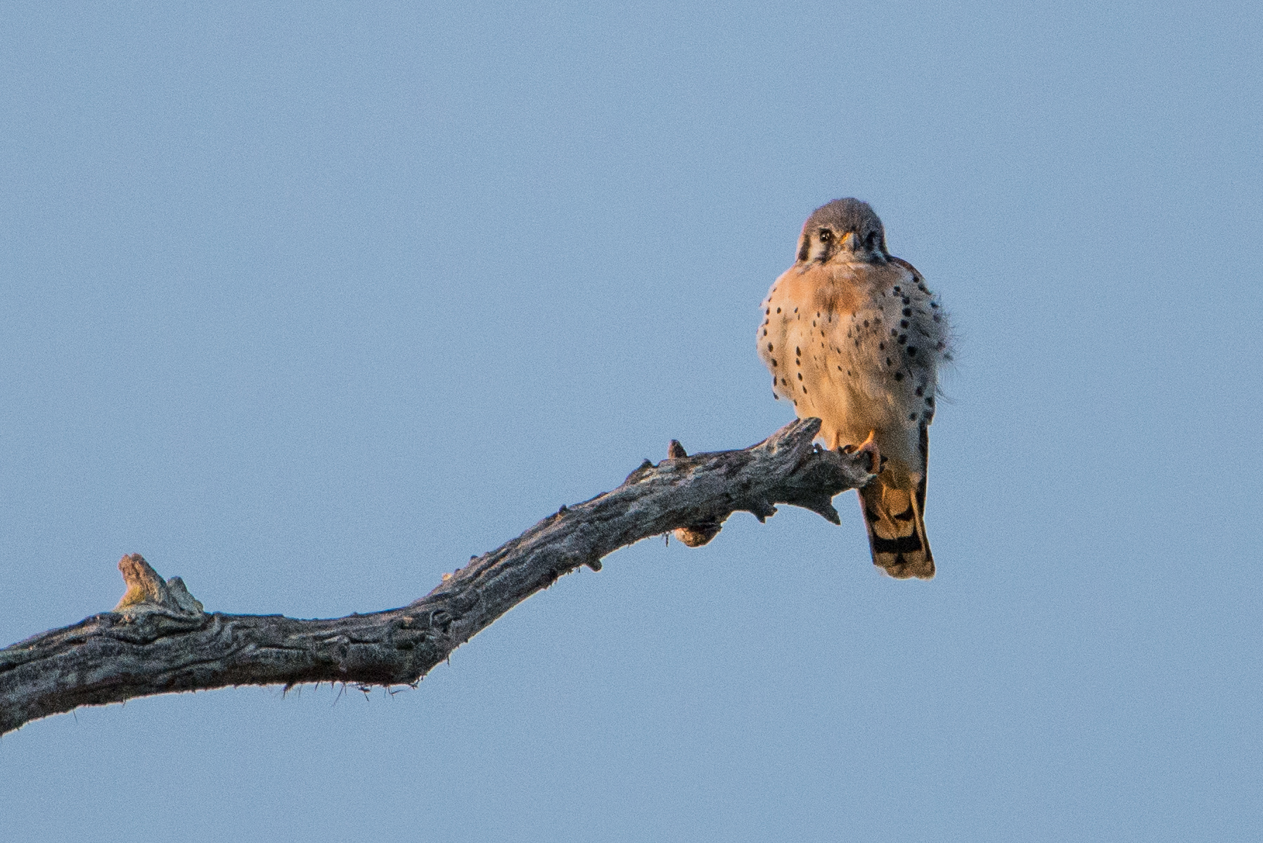 #bird, #wildlife, #florida, #audobon, #photography