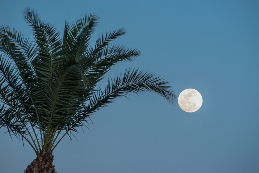 #palm, #moon, #supermoon, #nikon, #tamron, #fullmoon, #florida, #january30