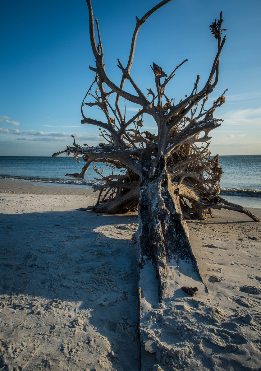 #loverskey, #tree, #skeleton, #shells, #rememberme, #stories