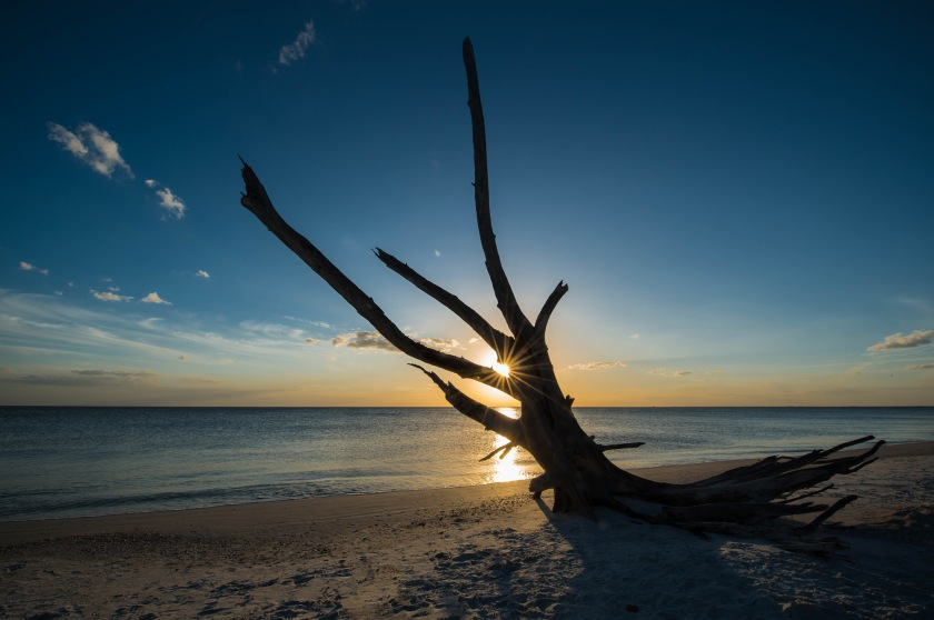 #sunset, #tree, #silhouette, #gulf, #florida, #loverskey, #gulfcoast, #nature, #sunstar