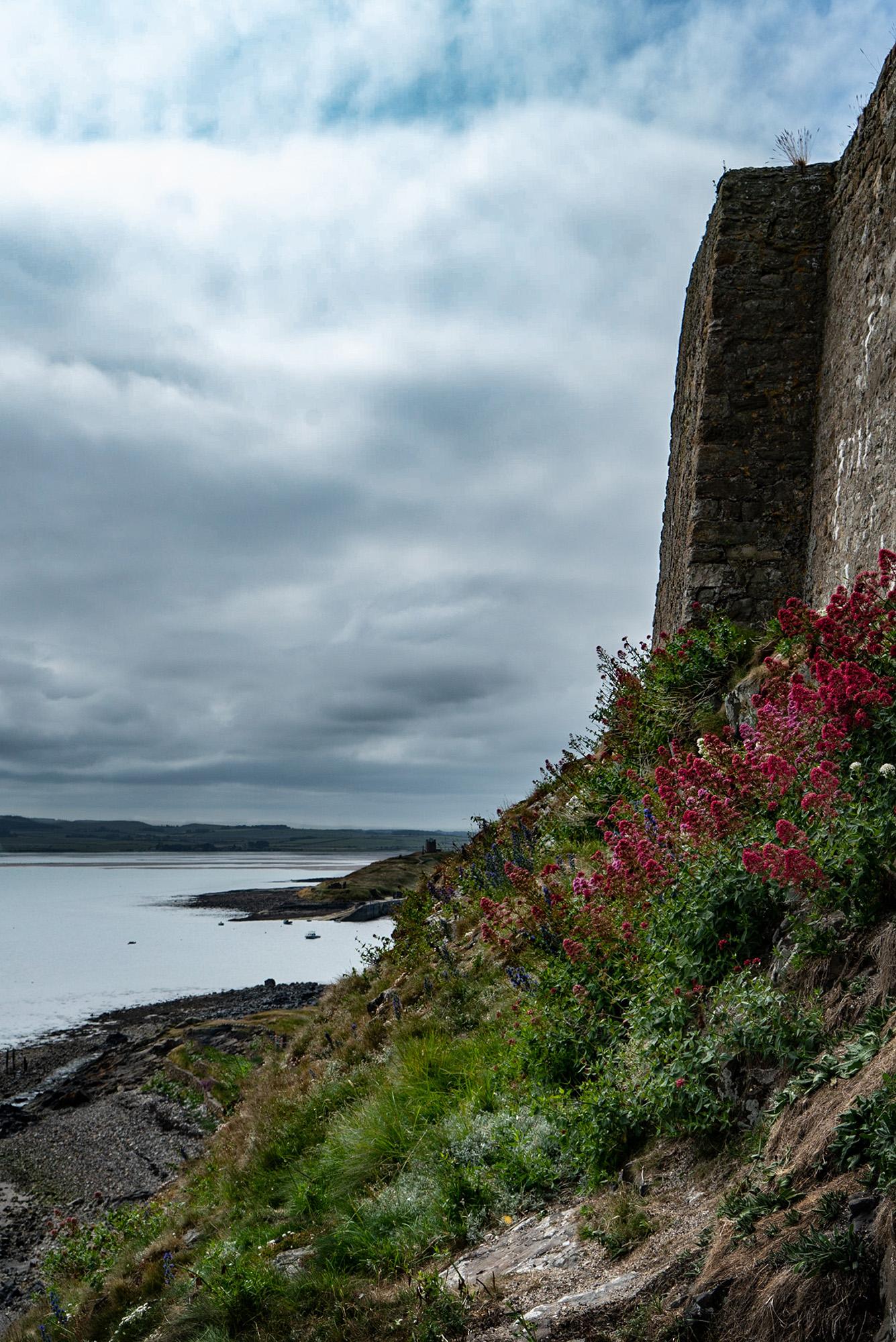 #castle, #wildflowers, #lindisfarne, #colorful, #pink, #pinkandgreen, #clouds, #northsea, #walls