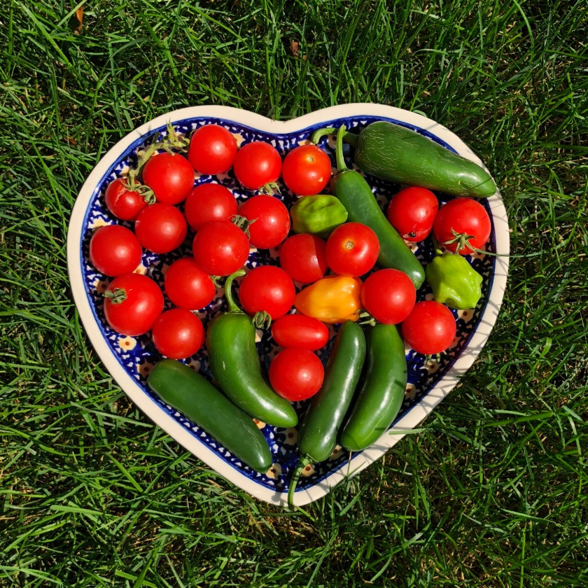 #vegetables, #tomatoes, #peppers, #grass, #plate, #heart