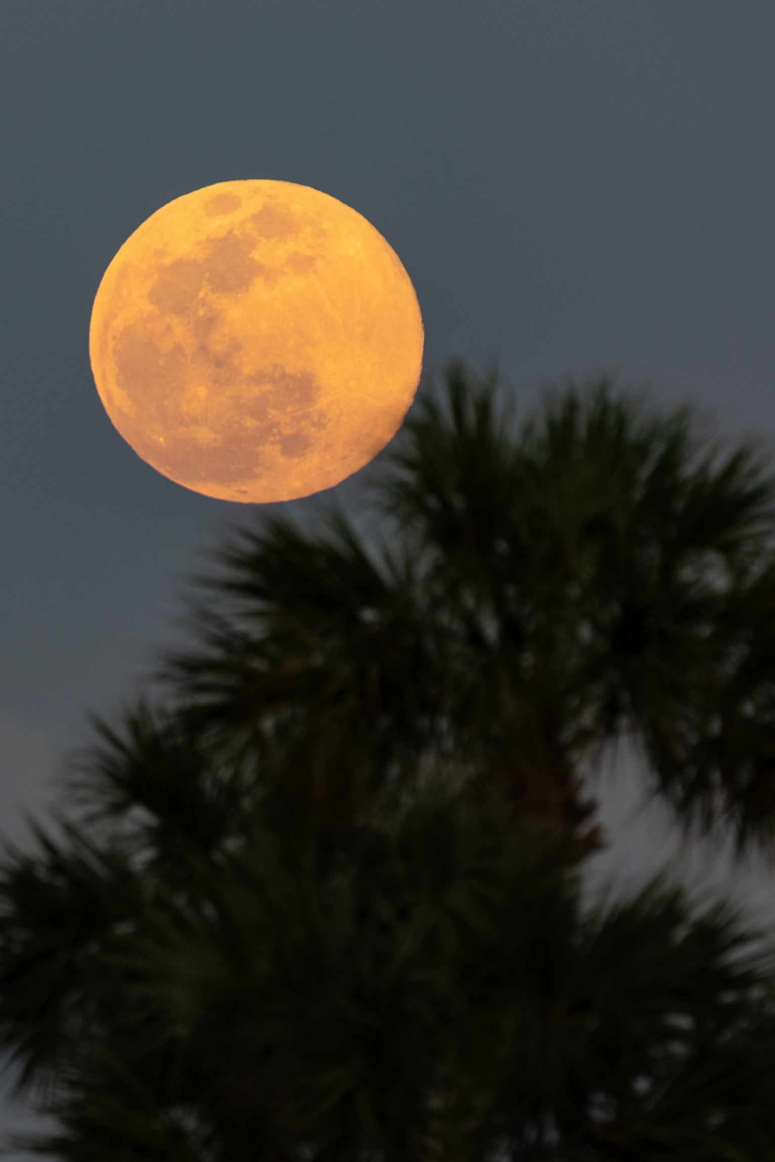 #supermoon, #moonrise, #sony, #luminar, #sonyalpha, #reallyrightstuff, #naturephotography, #sky, #outdoorphotography, #florida, #naplesflorida