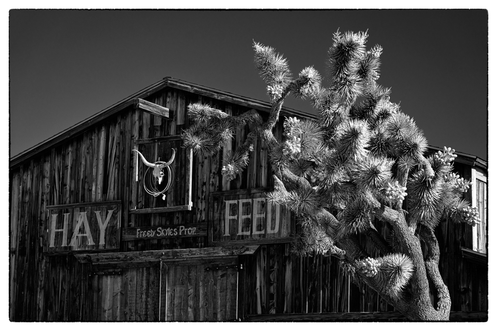 #wildwest, #pioneertown, #joshuatree, #joshuatreenationalpark, #socal, #thingstodo, #barn, #blackandwhite, #infared, #photography, #travelphotography, #sonyalpha