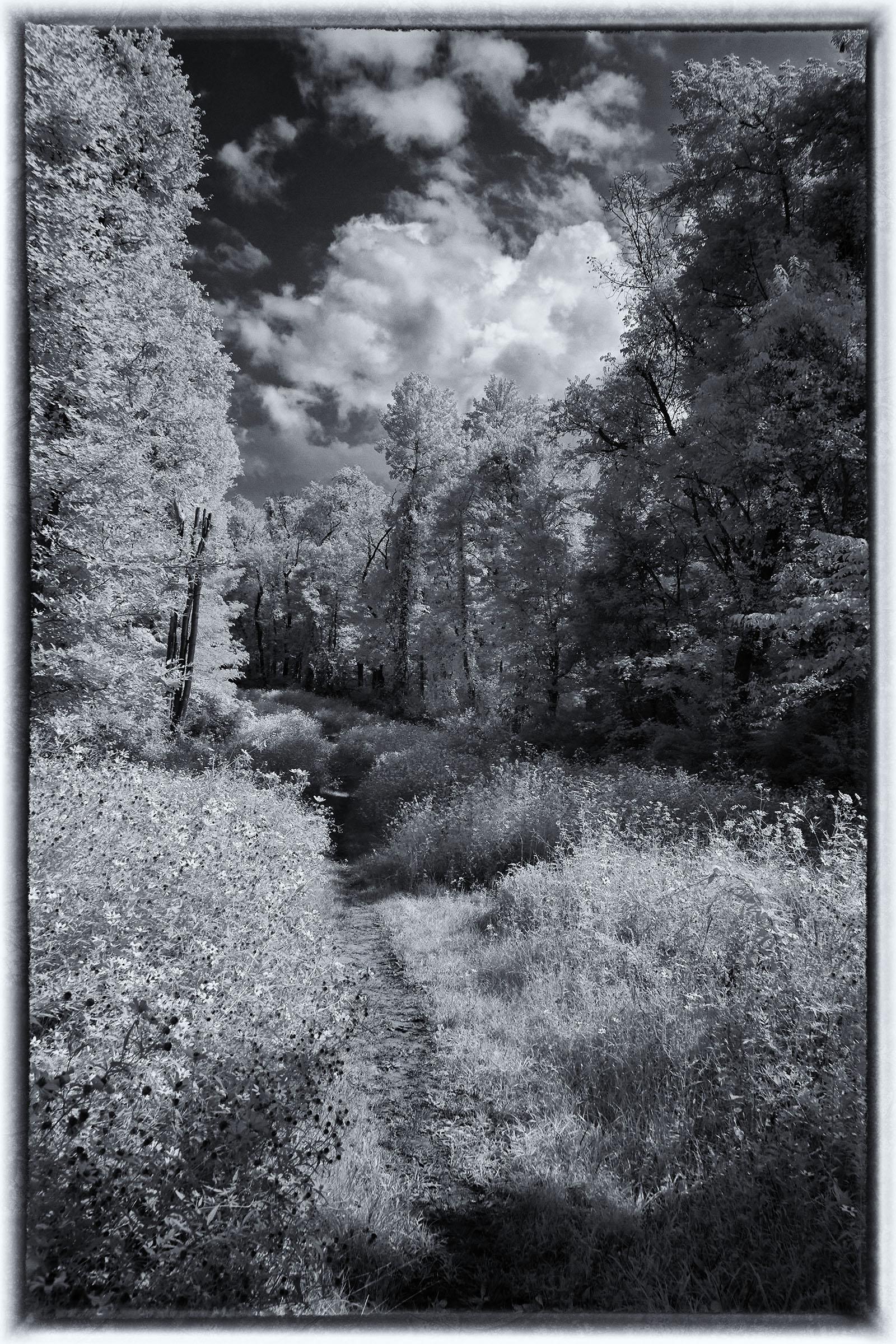 greyscale infared photograph